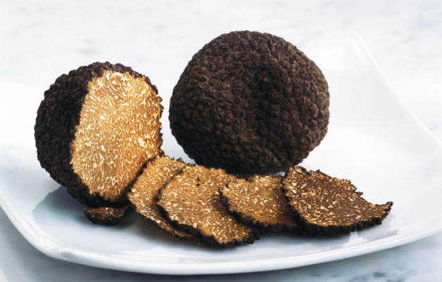Truffle on plate, close-up