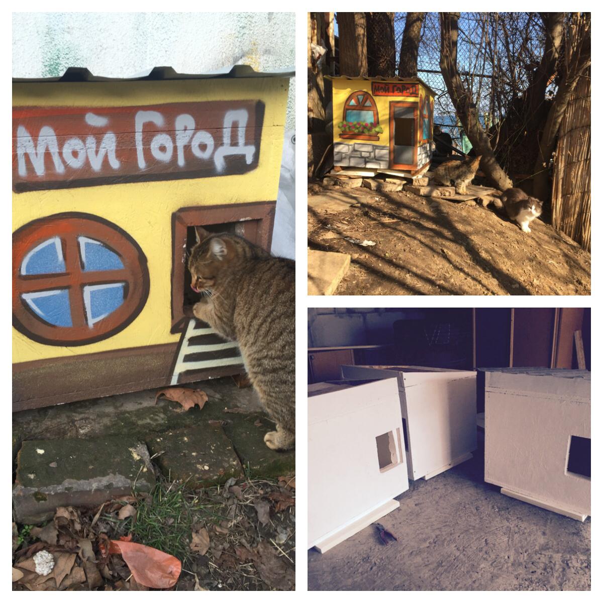 В Одессе установят домики для бездомных животных, созданные детьми