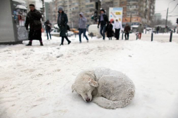 Одесские ветеринары советуют, как помочь бездомным животным в снег и мороз