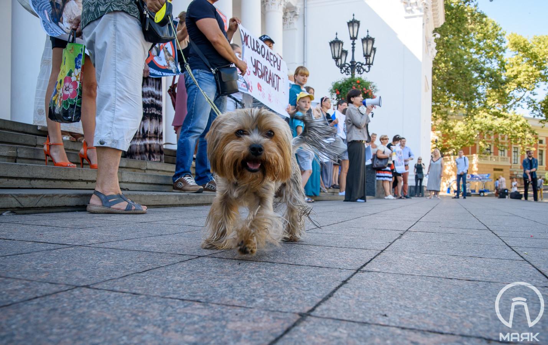 В Одессе потребуют запрета незаконной эксплуатации животных