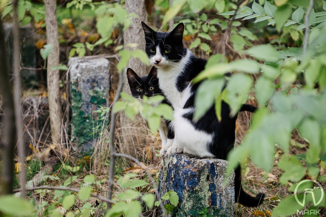 В Одессе на зиму откроют подвалы для бездомных кошек