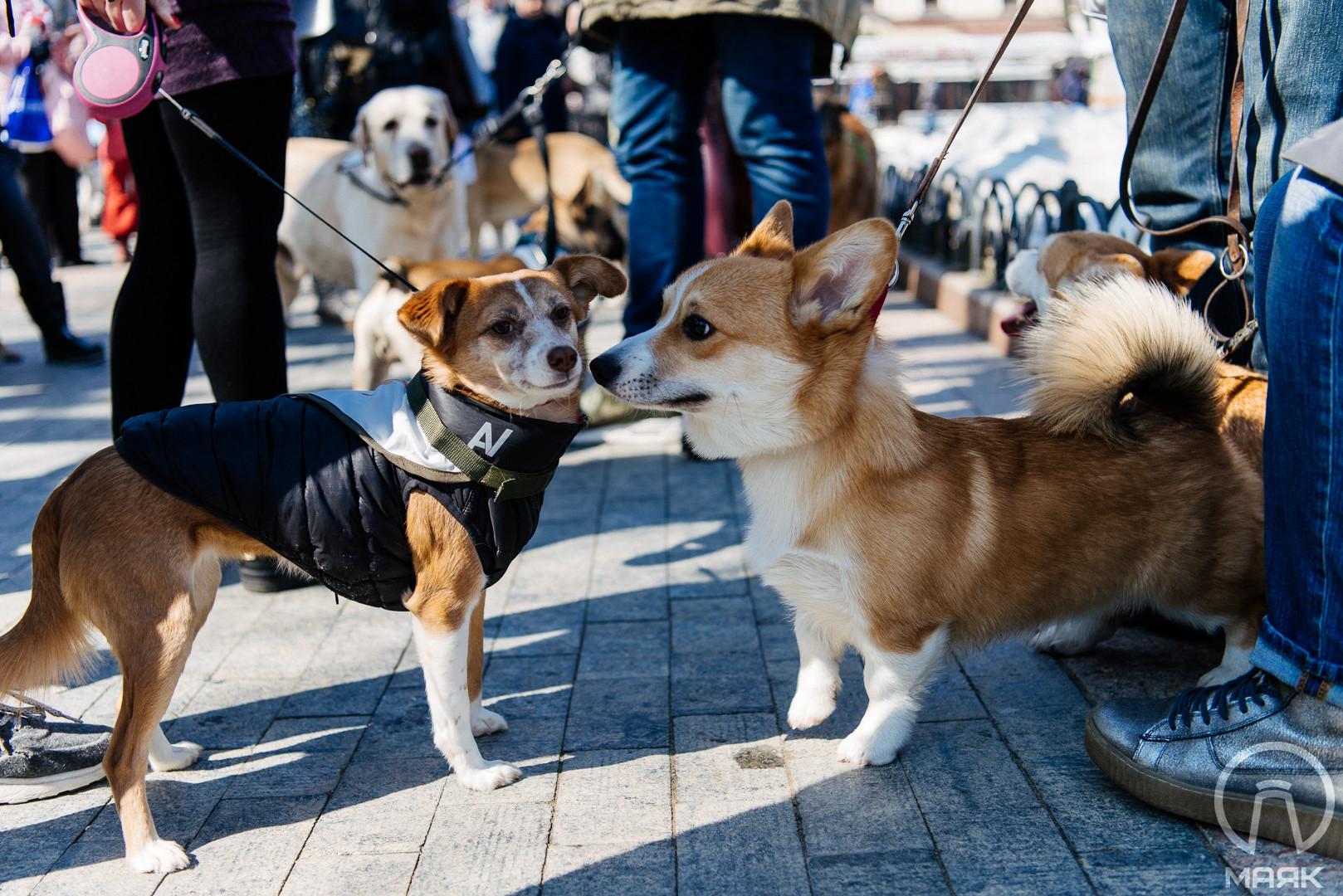 В центре Одессы прошел Марш спасенных собак