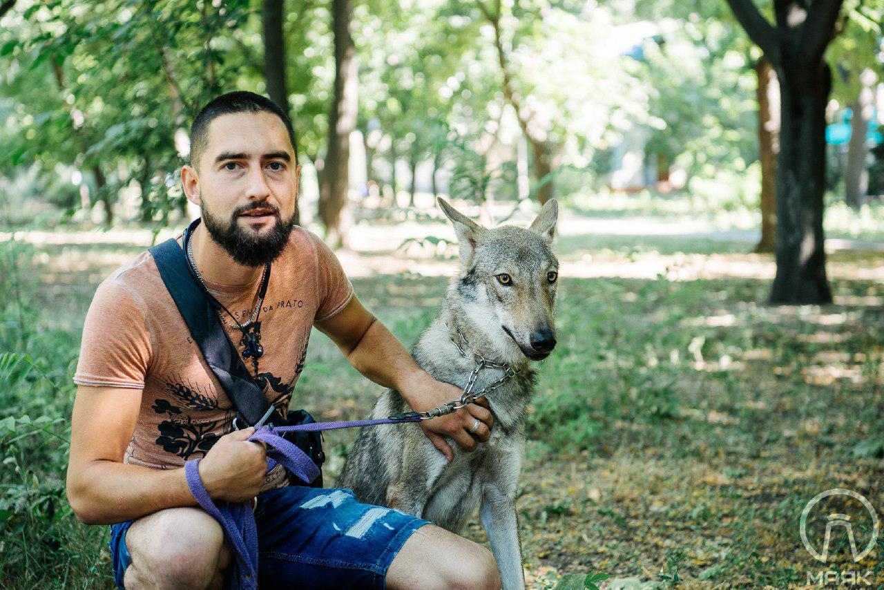 Как одессит держит в квартире волка и выгуливает его в парке