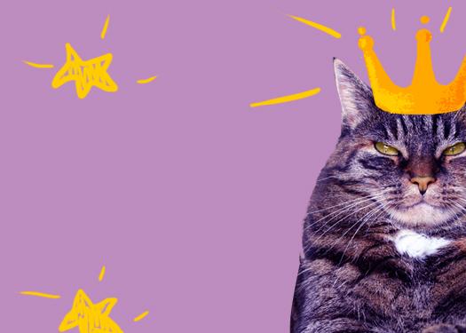 Исследование: кошки должны оставаться дома, чтобы не вредить природе