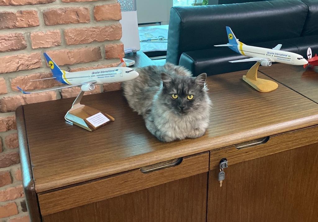Николас живет в офисе МАУ.