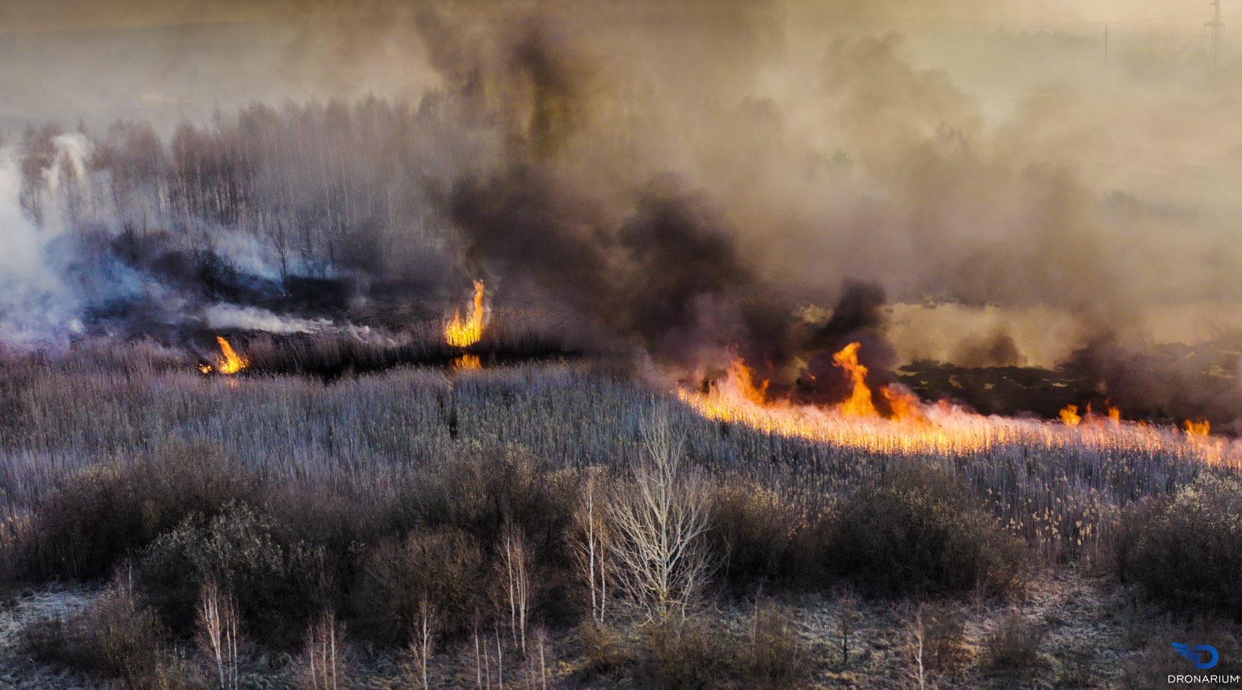 японскими считаются картинки чернобыль пожар фото