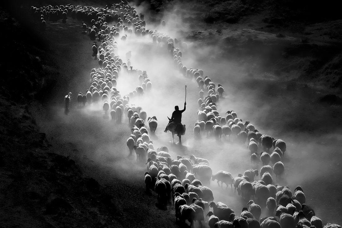 Третье место — «Хороший пастух». Ф. Дилек Уйар.