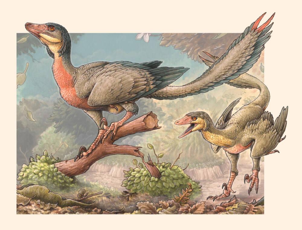 Так выгляделOveroraptor chimentoi.