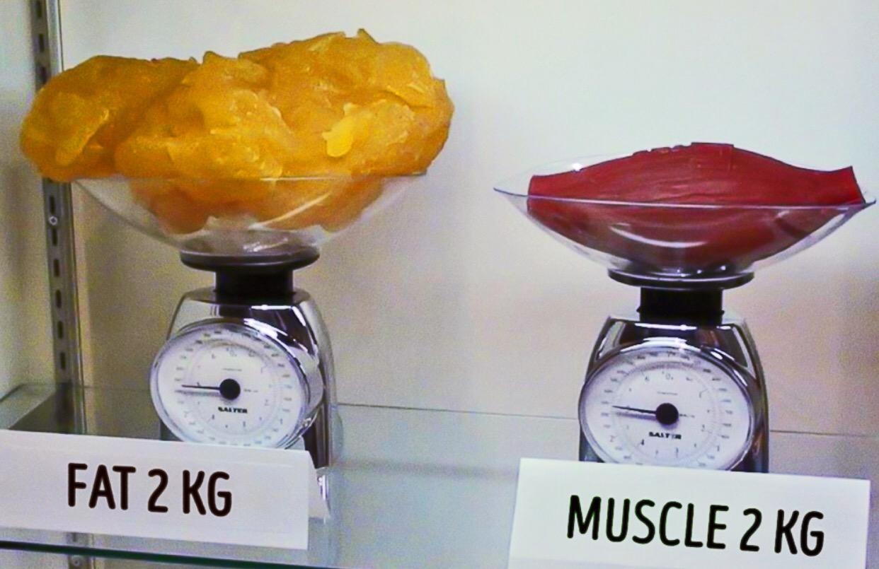 На фото жир и мышцы одинаковой массы. Разница в объемах — существенная.