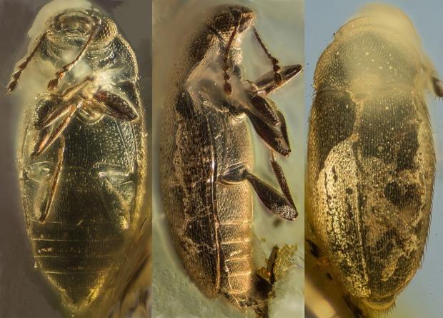 Фото — Invertebrate Zoology.