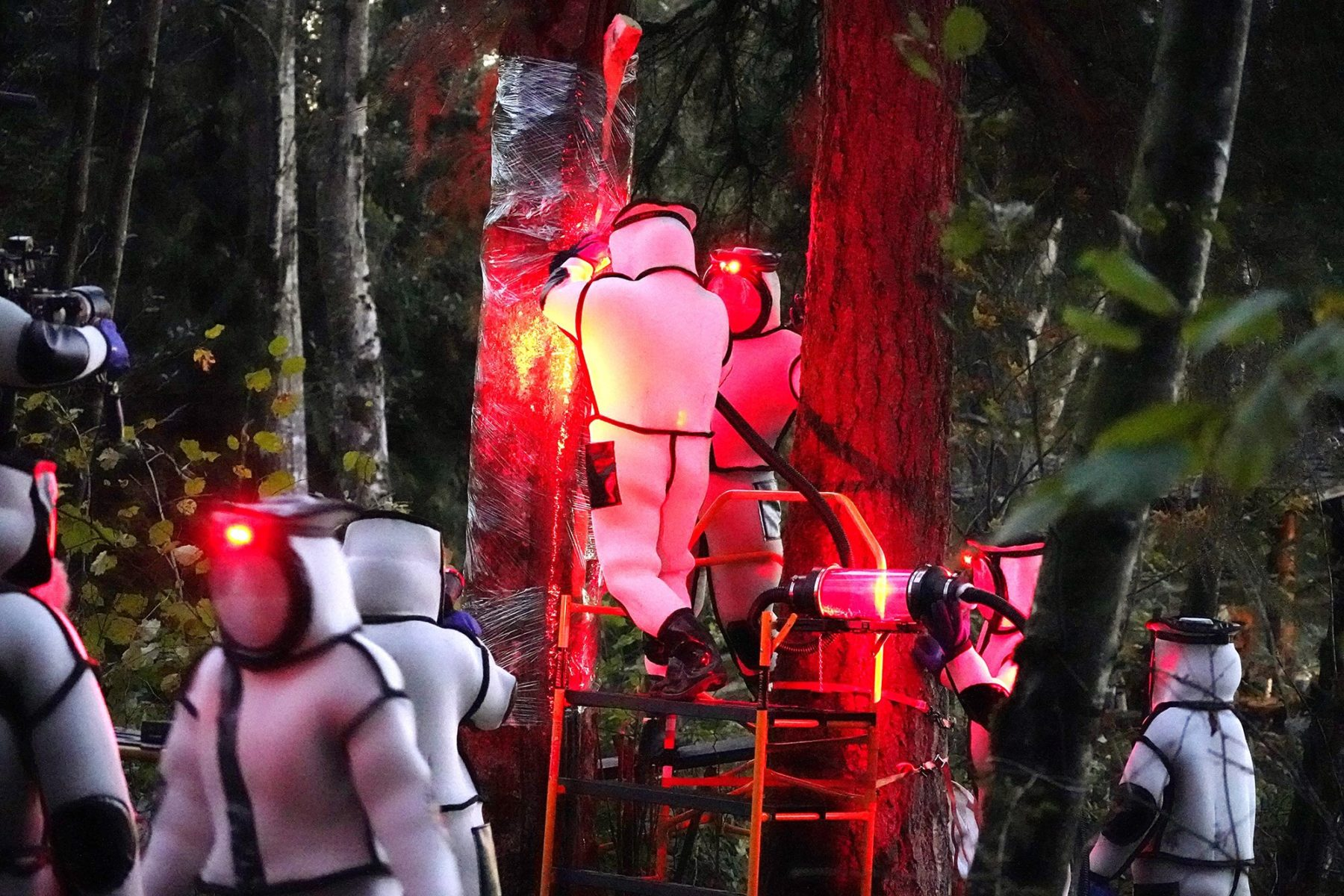 Снимок дня. Энтомологи в фантастических костюмах уничтожают первое в США гнездо «шершней-убийц»