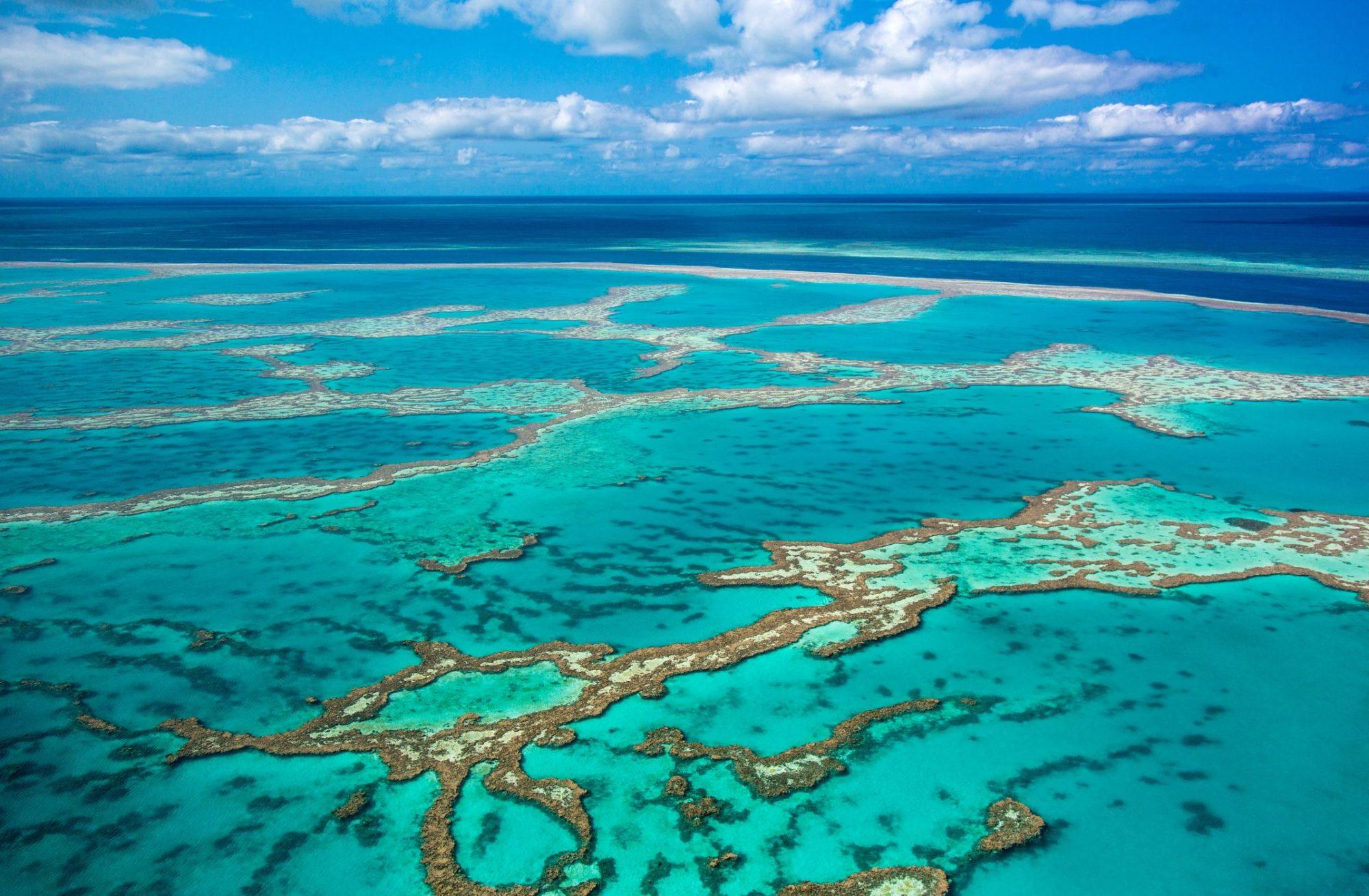 Большой Барьерный риф за четверть века потерял половину кораллов