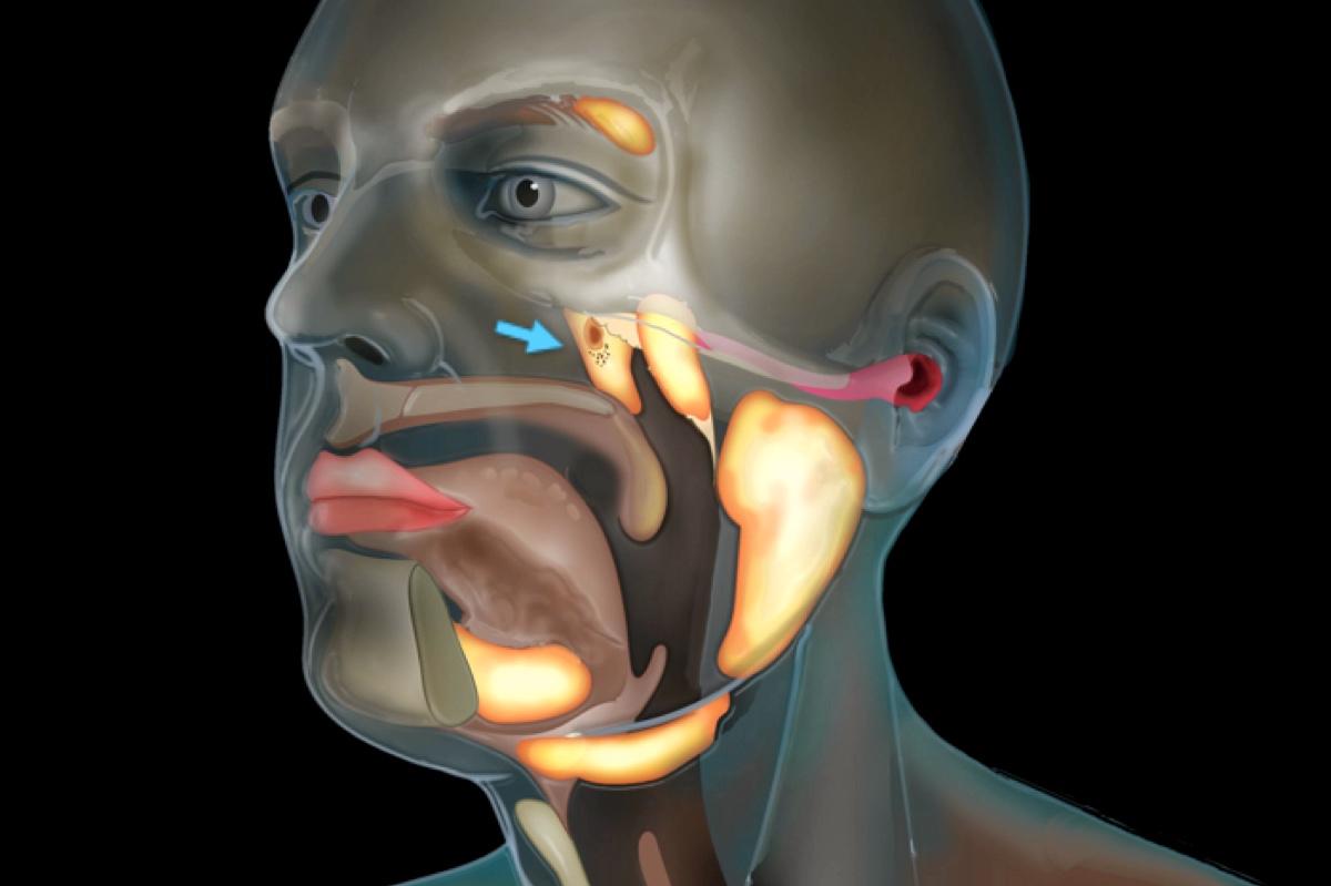 Ученые обнаружили в центре головы человека новый орган