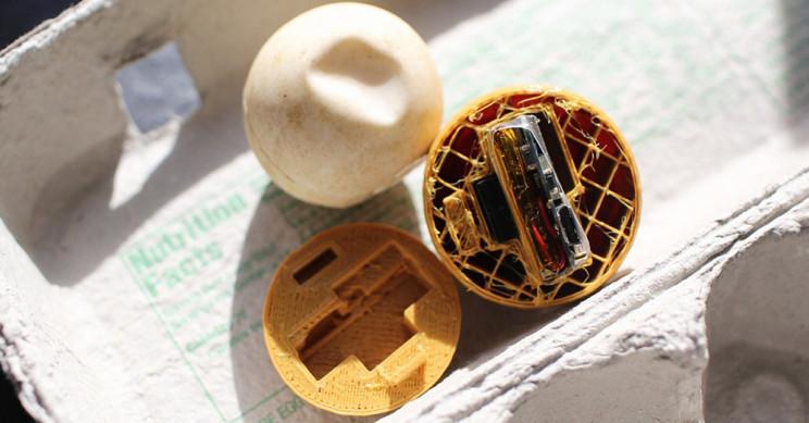 Ученые разработали черепашьи яйца-приманки с GPS-трекером для борьбы с браконьерством