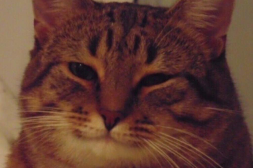 Британские ученые назвали эффективный способ невербальной коммуникации кошек и людей