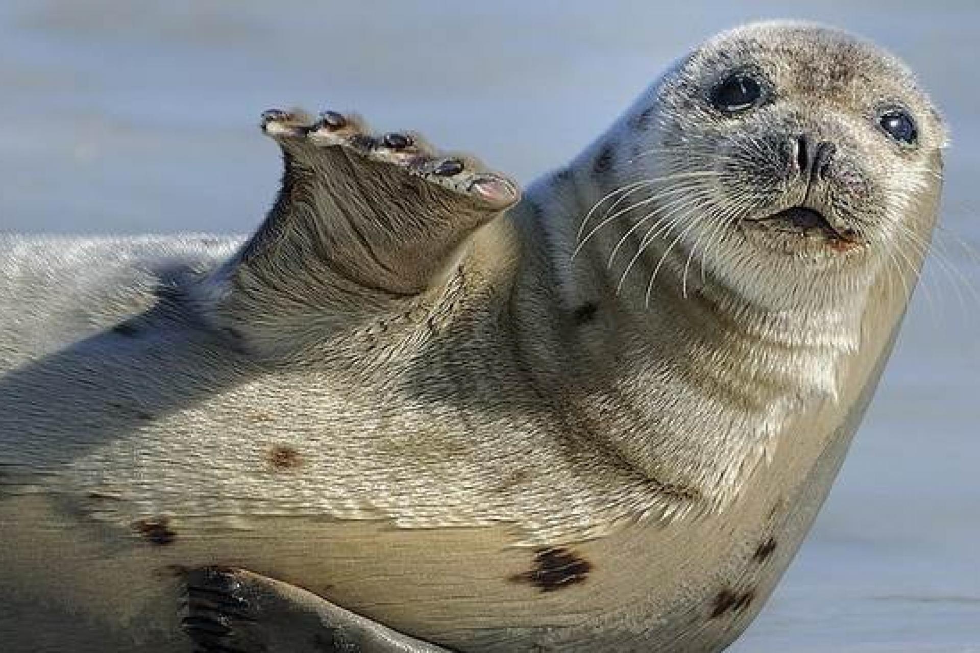 Opera ищет человека, который за 8 тысяч евро две недели будет смотреть глупые мемы и видео с тюленями