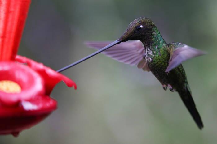 В Колумбии открылся заповедник колибри. Десять лет назад здесь был вырубленный лес
