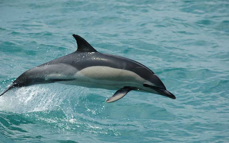 Фото — Dolphins-World.