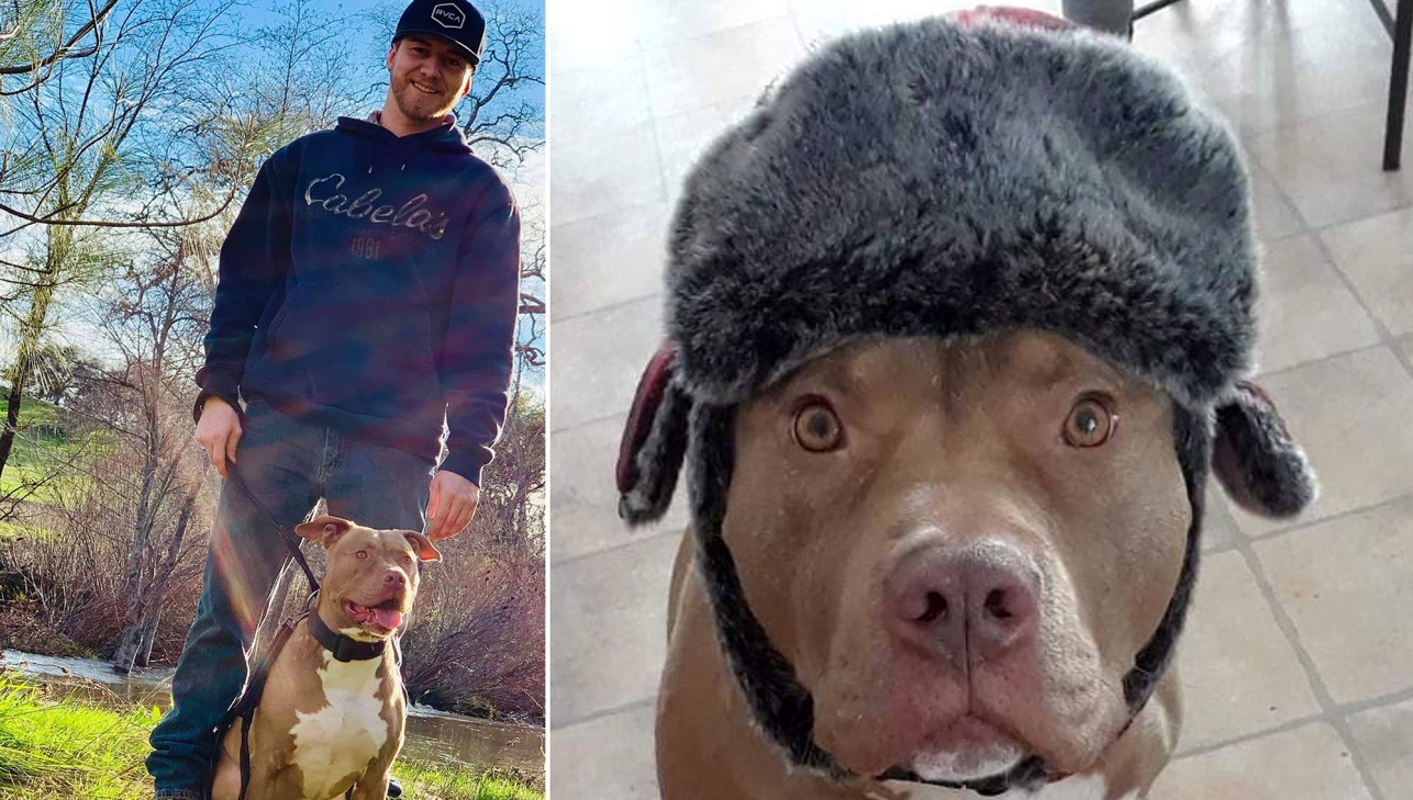 «Я бы умер за свою собаку». Мужчина из Калифорнии голыми руками отбил пса у медведя