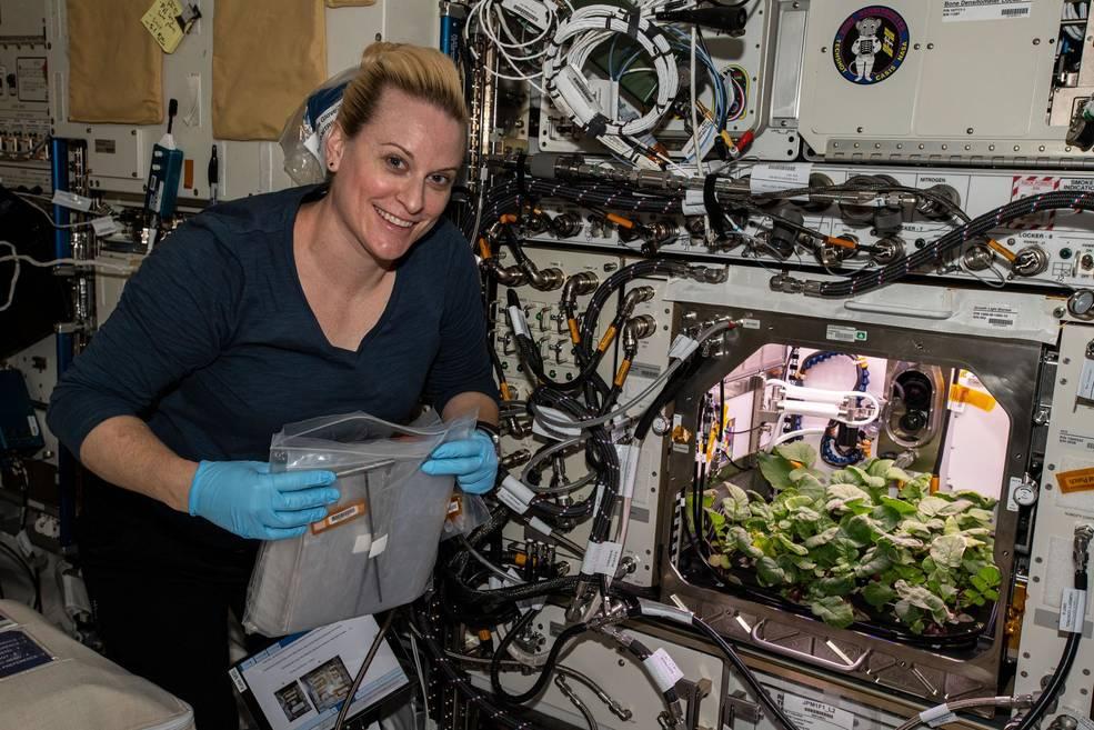 Астронавты на МКС собрали первый урожай редиса