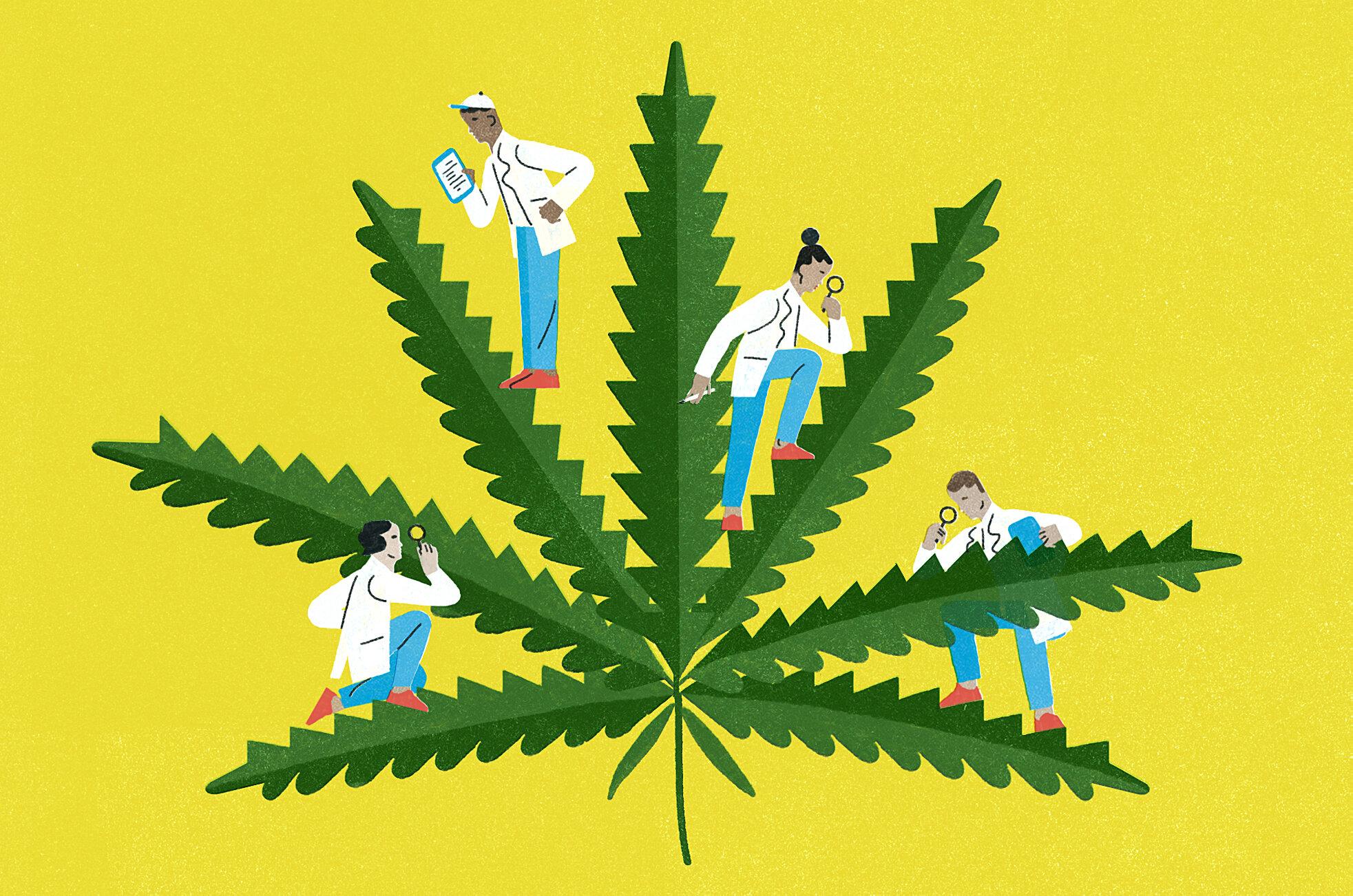 ООН исключила медицинский каннабис из списка опасных наркотиков
