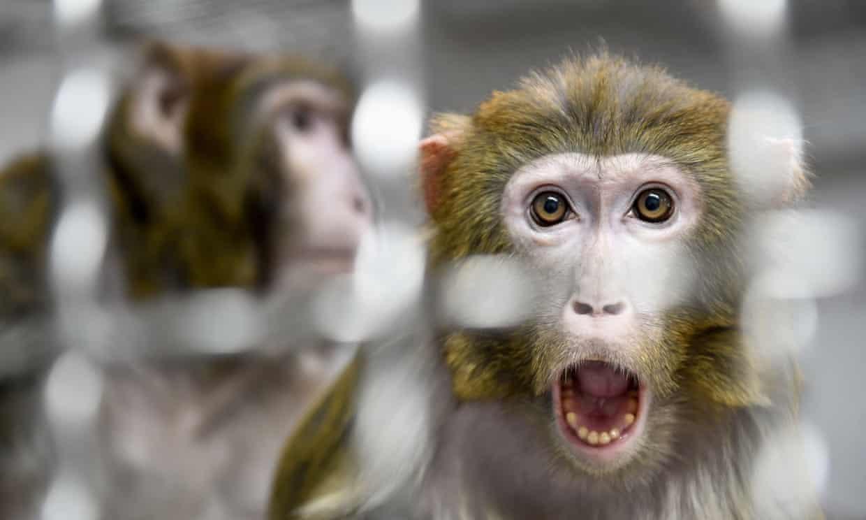NASA усыпило 27 обезьян из своих лабораторий. Их могли отправить в приют, но не стали