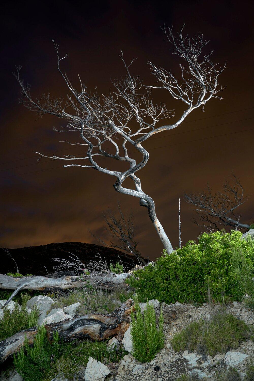 Мертвое дерево (2020 год).