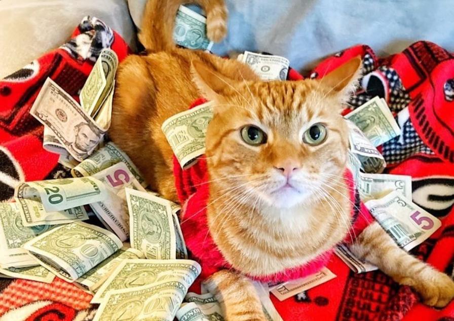 Instagram дня. Коты и деньги — что вам еще нужно?