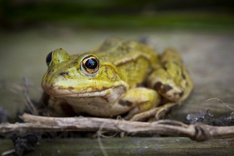 Французский суд переселил лягушек, которые слишком громко квакали
