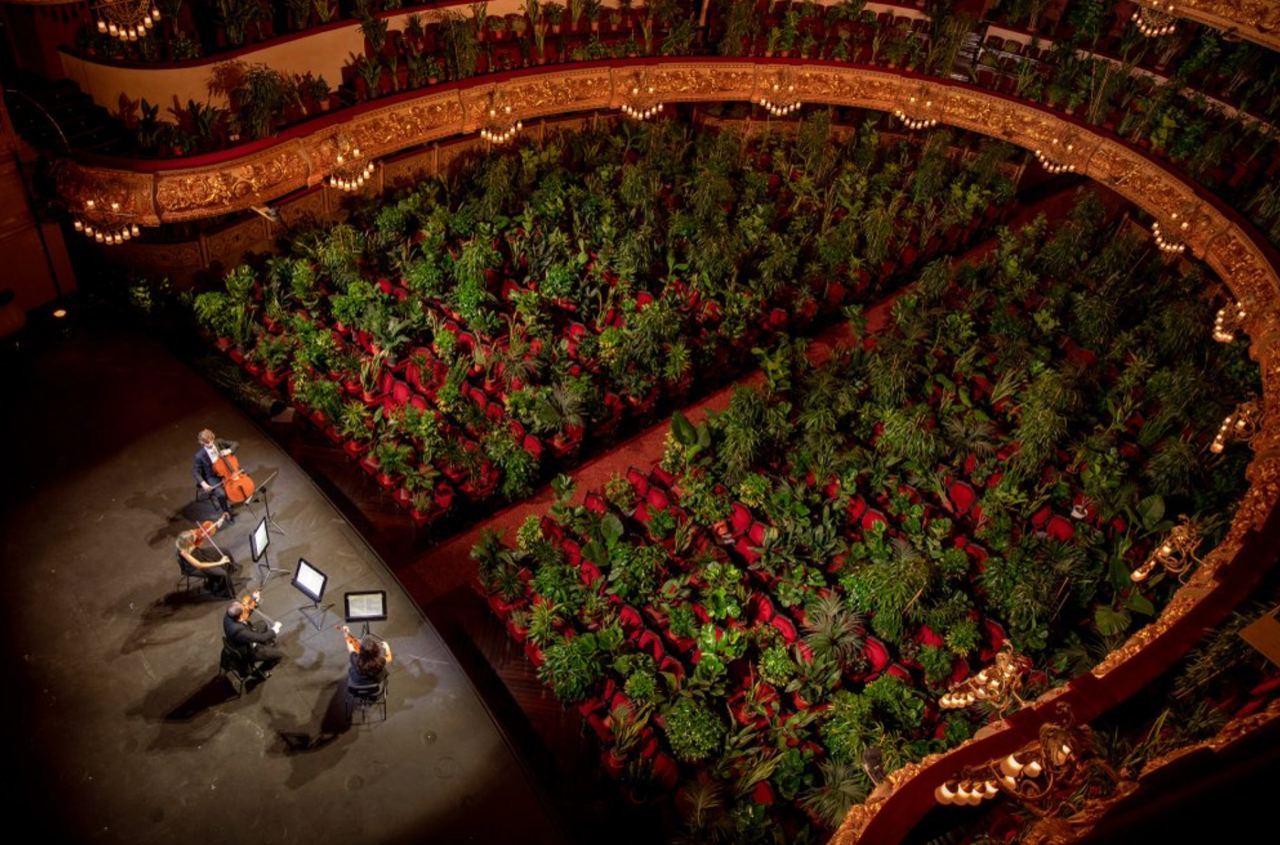 Музыканты театра «Лисео» в Барселоне выступают перед растениями. Организаторы концерта хотели подчеркнуть важность публики для музыкантов. Все растения вручили медработникам, борющимся с пандемией.