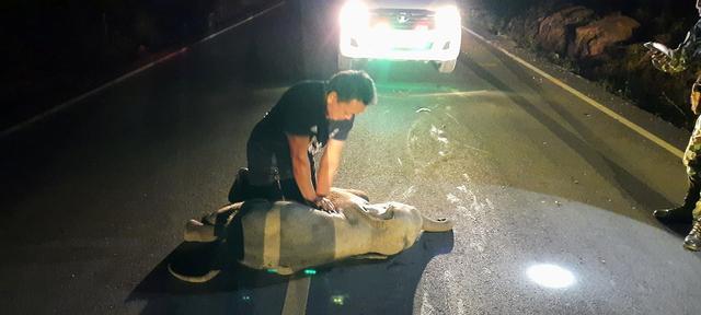 Таиландец сделал слоненку непрямой массаж сердца и спас ему жизнь после аварии