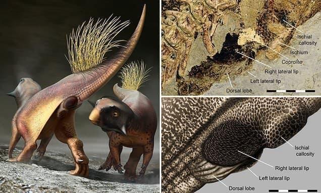 Ученые выяснили, как выглядели гениталии динозавров