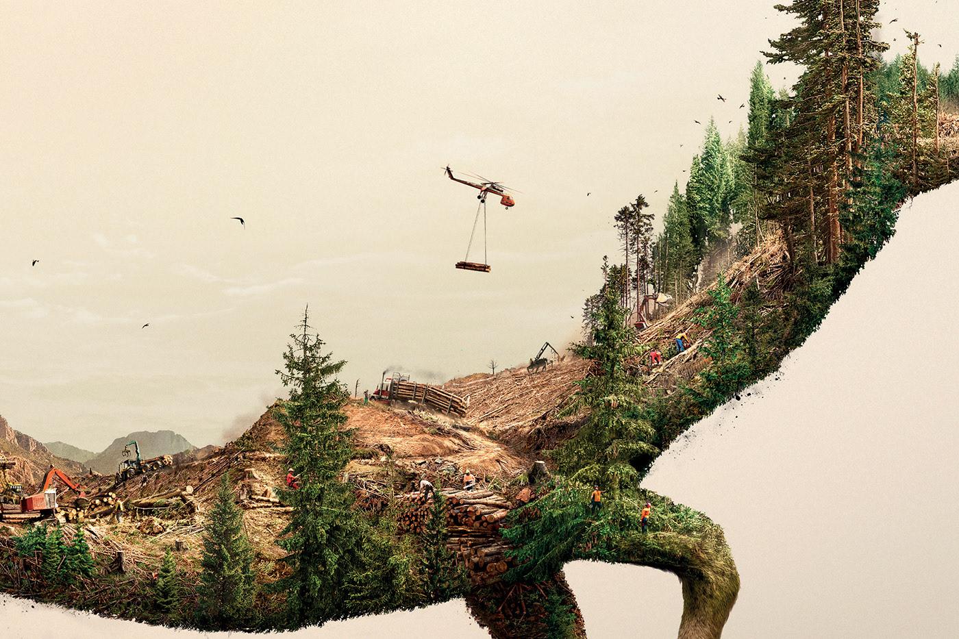 За 30 лет человечество уничтожило 420 миллионов гектаров леса — ООН