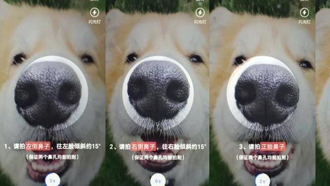 Китайские собаки получат ID-паспорта с отпечатком носа