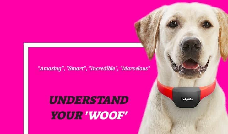 Собачий ошейник с искусственным интеллектом может различить пять эмоций в лае