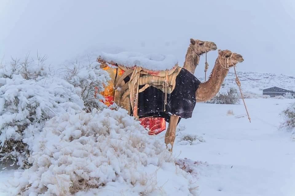 Снимок дня. Верблюды стоят в снегу посреди пустыни