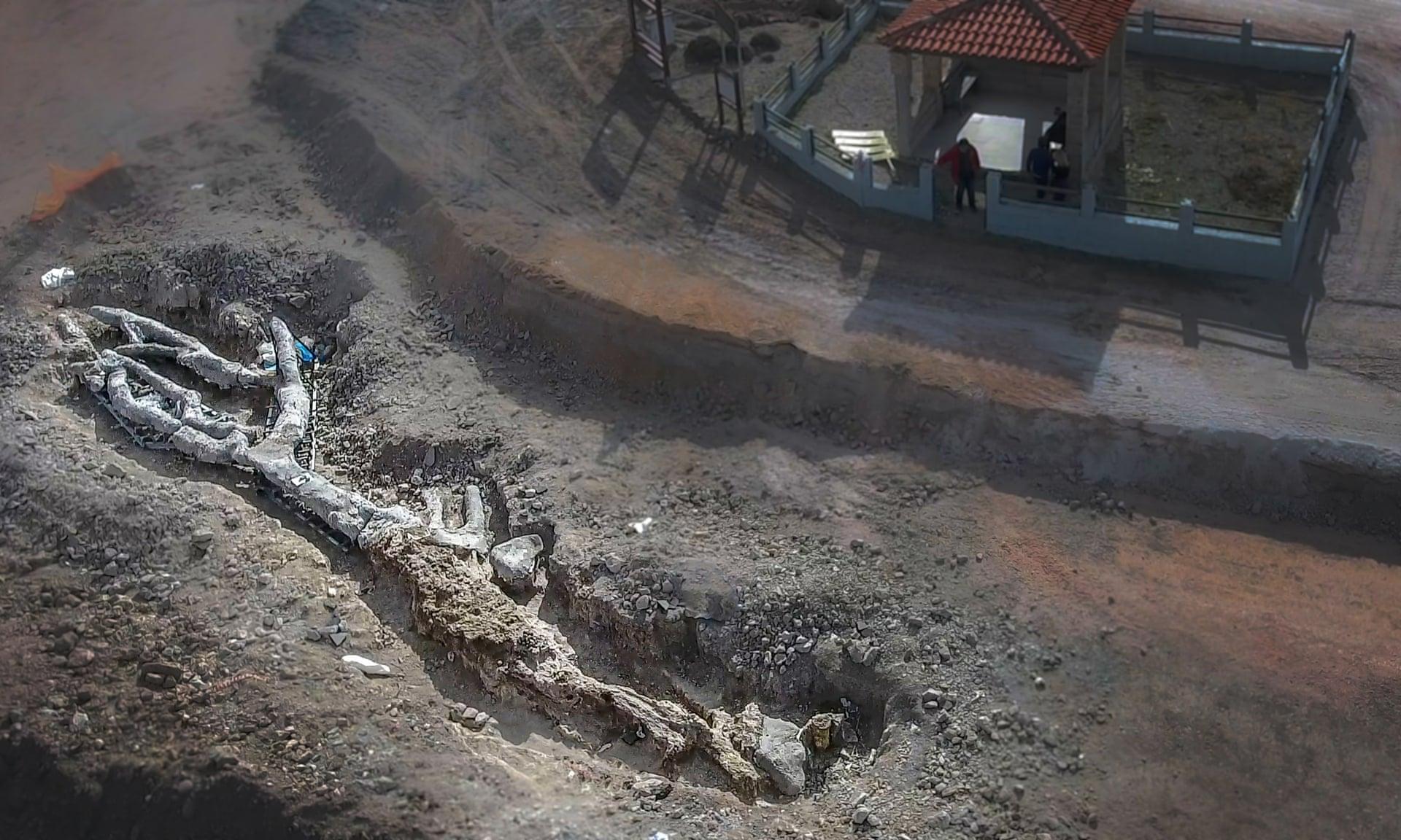 Греческие археологи нашли окаменелое дерево, которому 20 миллионов лет. На нем есть листья
