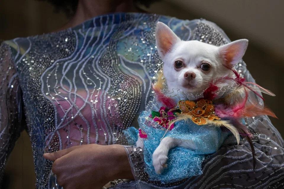 Собаки из приюта для животных стали моделями на New York Fashion Week
