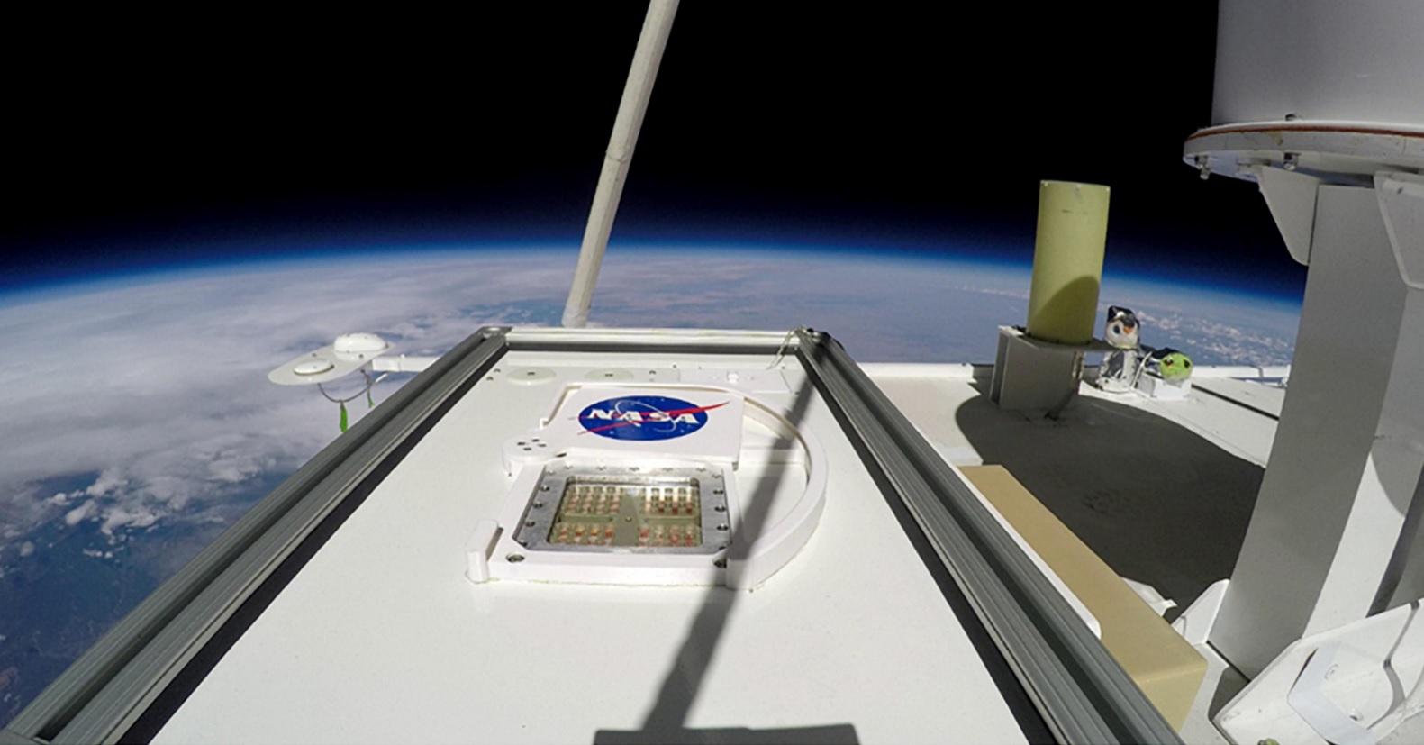 Земные микробы и грибы способны выжить на Марсе. Исследование