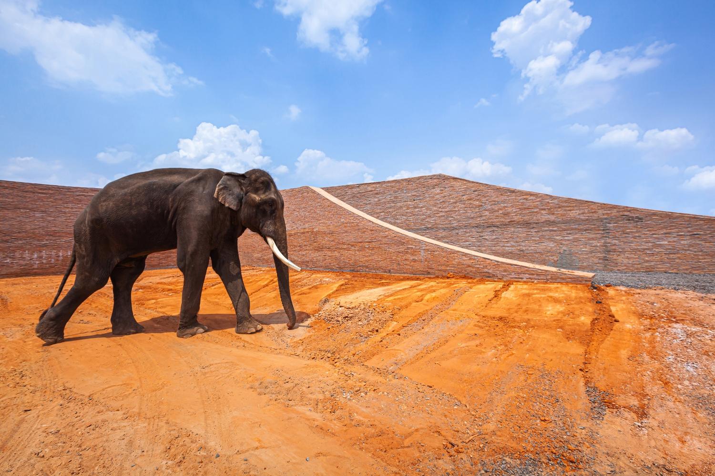 Таиландские архитекторы построили музей с игровой площадкой для слонов
