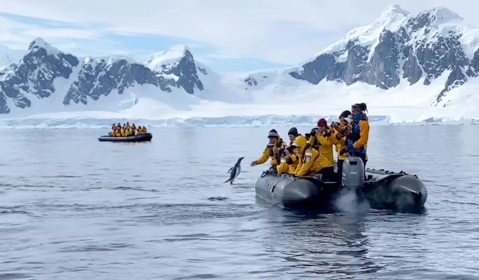 Видео дня. Пингвин, спасаясь от косаток, запрыгивает в лодку с туристами