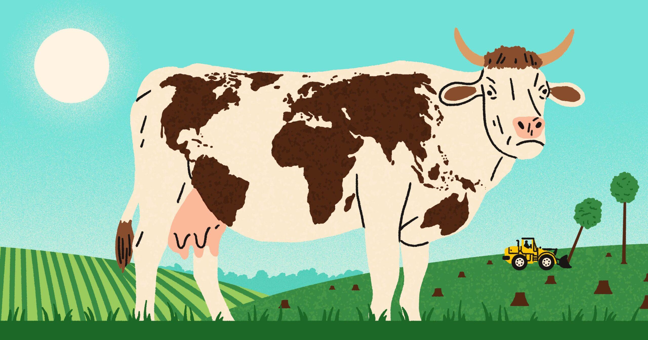 Ученые предлагают кормить коров водорослями — чтобы уменьшить выбросы метана