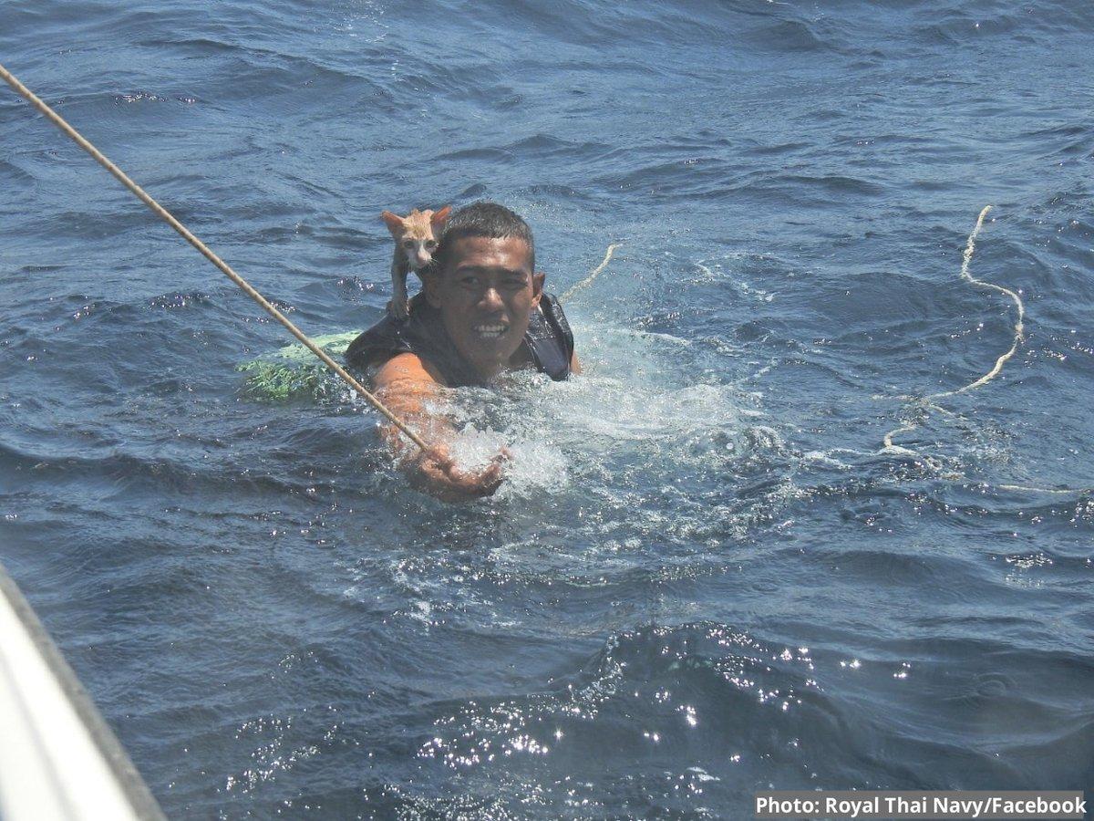 Снимок дня. Тайский военный спасает четырех кошек с тонущего корабля
