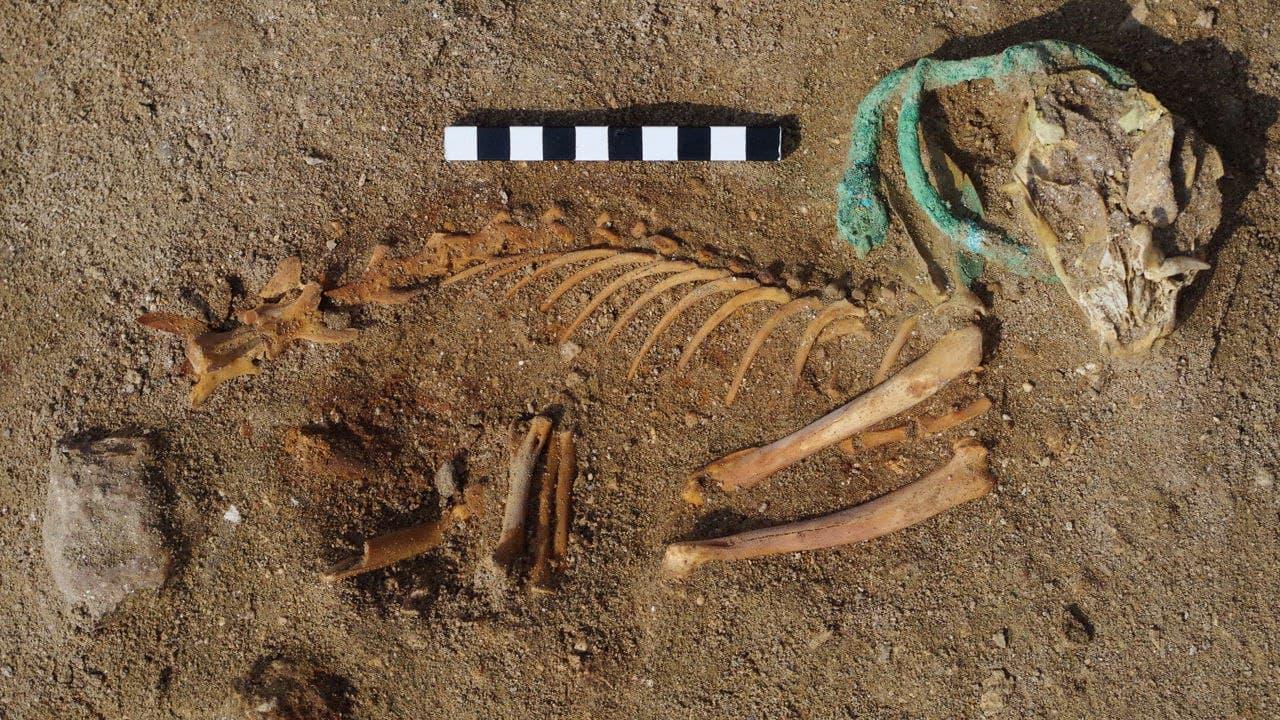 Археологи нашли крупнейшее кладбище домашних животных. Большая часть захоронений — кошки