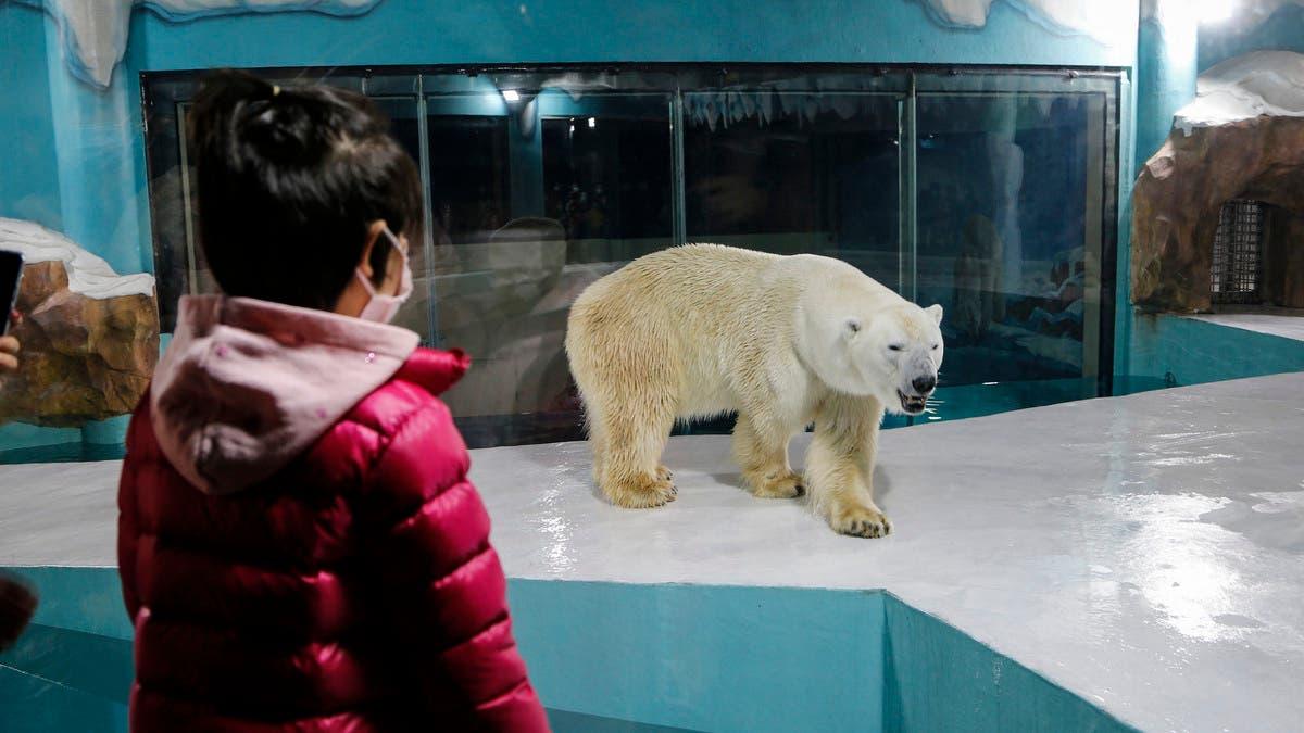 В Китае открылся отель с белыми медведями. Зоозащитники призывают бойкотировать его