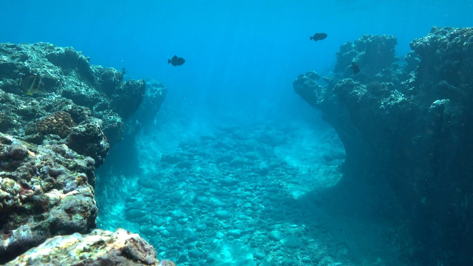 Как Google Earth, только для океанов. Два бывших морпеха США планируют создать карту 98% морского дна