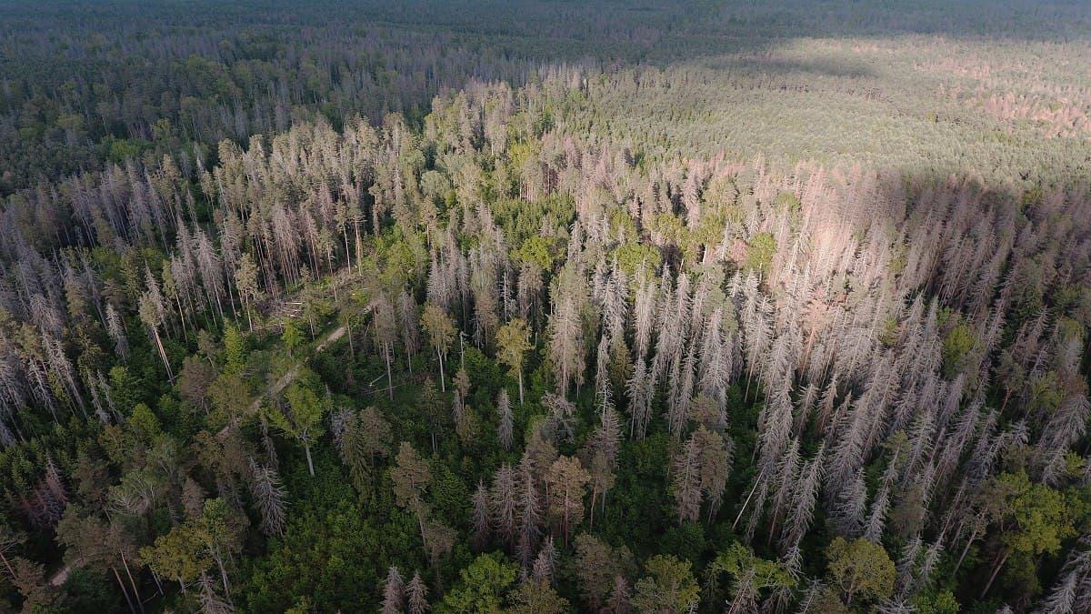 Польша планирует вырубку деревьев в заповеднике Беловежская пуща