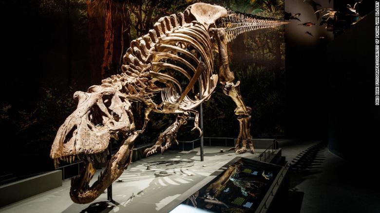 Тираннозавр ходил так медленно, что человек мог бы легко обогнать его пешком. Исследование