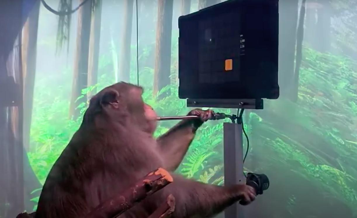 Видео дня. Стартап Маска показал, как обезьяна с чипом в мозге играет в видеоигры «силой мысли»