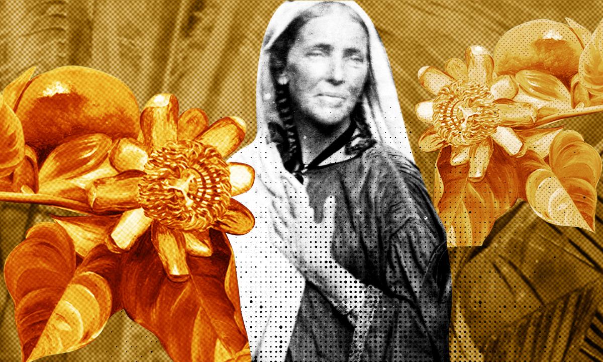 Не выйти замуж, а отправиться в кругосветку. История художницы-ботаника викторианской эпохи